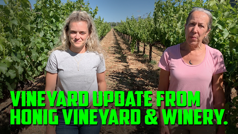 2021 Vintage Update from Honig Vineyard & Winery in Rutherford