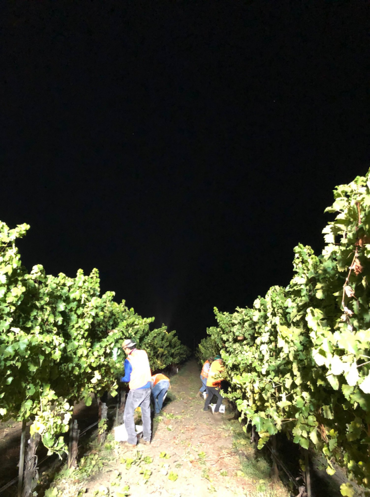 Night Harvest in Napa Valley