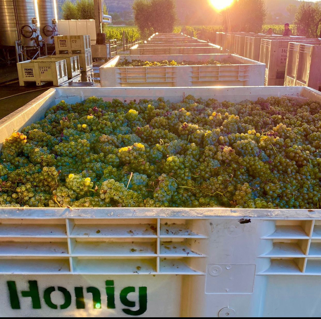2021 Harvest is officially underway!