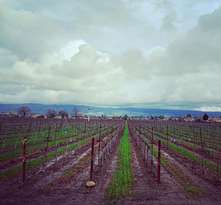 Winter in Napa Valley means Rain