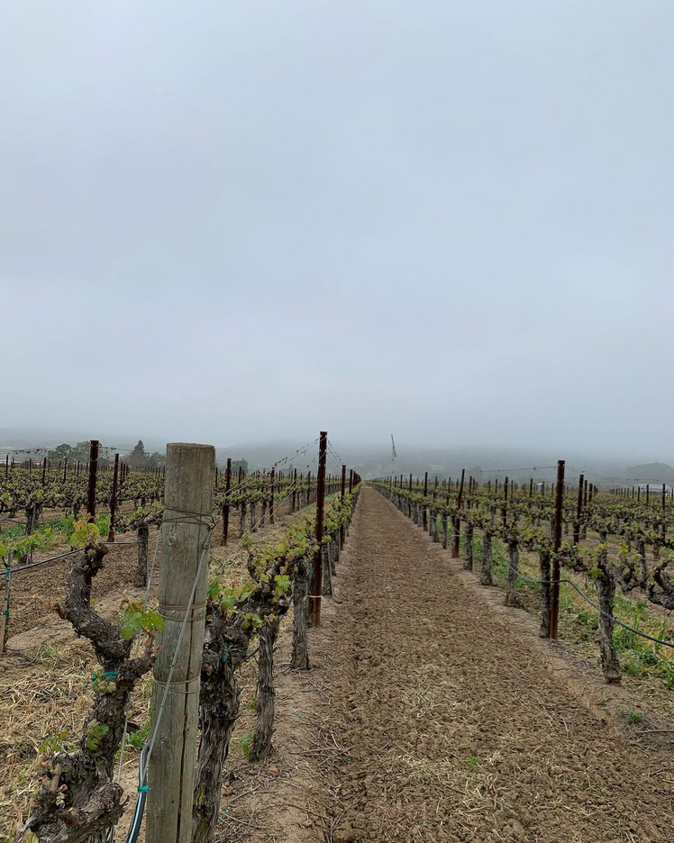 "Napa Valley meets ""Karl The Fog"" almost daily in spring and summer…"