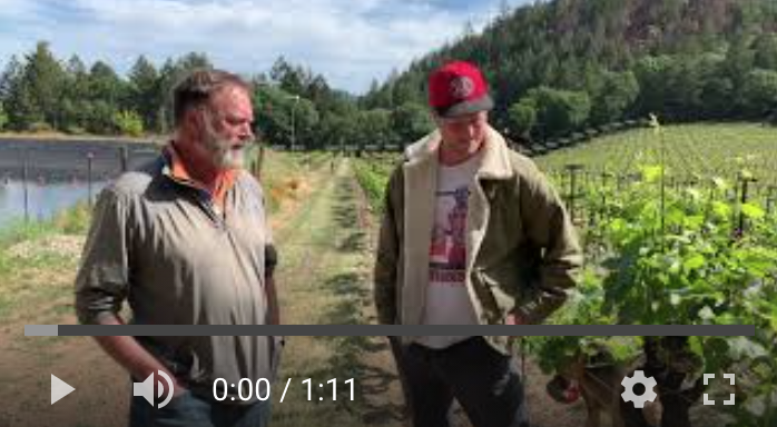 Vintage 2021 update from Keenan Winery on Spring Mountain in Napa Valley
