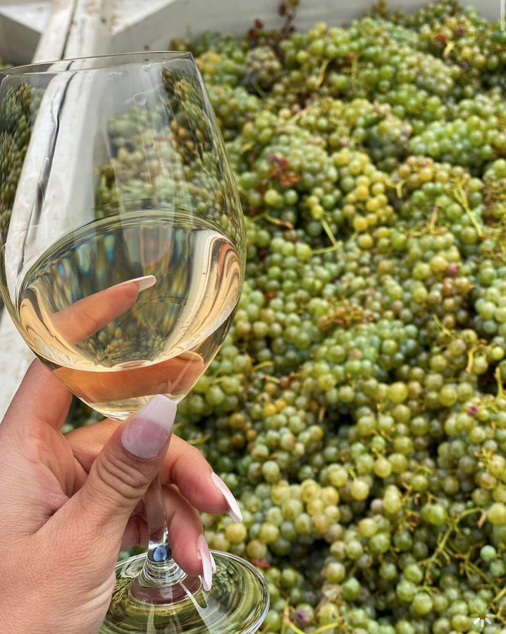 Harvest Update – grapes coming in all over the valley now.
