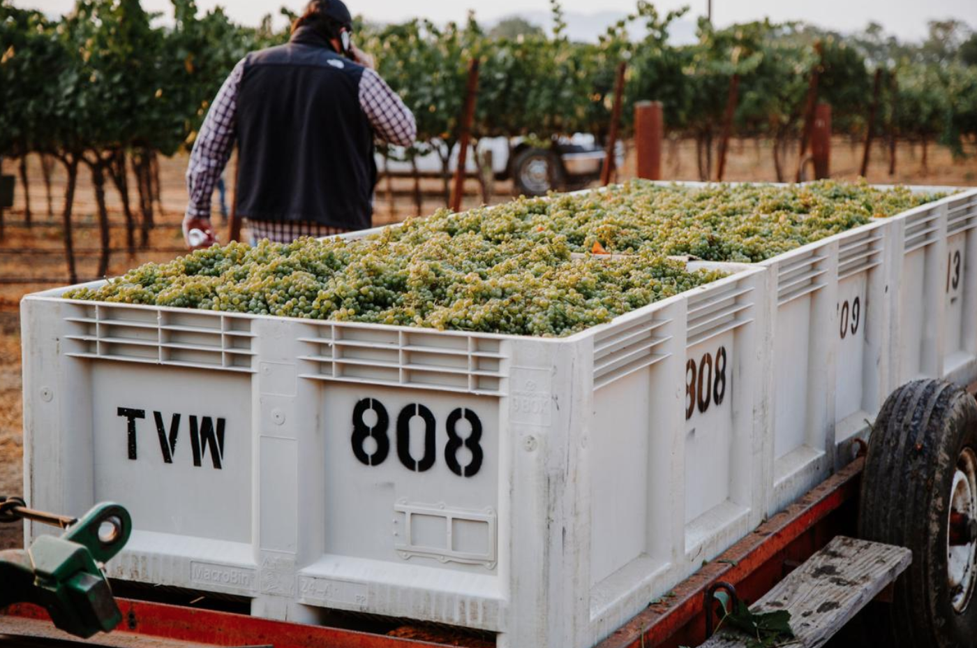 Napa Valley harvest report: 2021 harvest begins with high hopes by Jesse Duarte