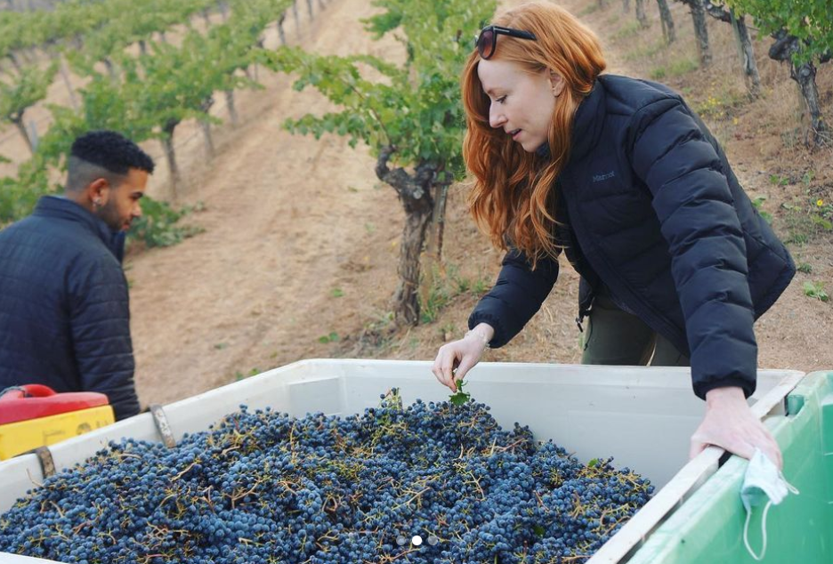 Reds are starting to come in at a few places in Napa Valley