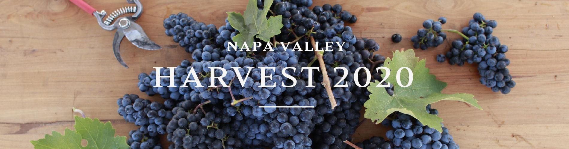 Napa Valley Harvest 2020