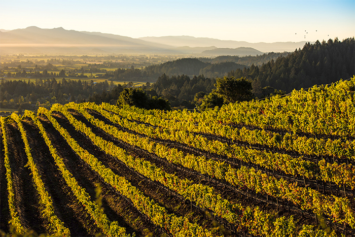 All eyes looking to Napa Valley for an exciting 2021 growing season